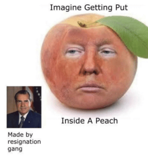 It's a small gang we need new members: Imagine Getting Put  Inside A Peach  Made by  resignation  gang It's a small gang we need new members