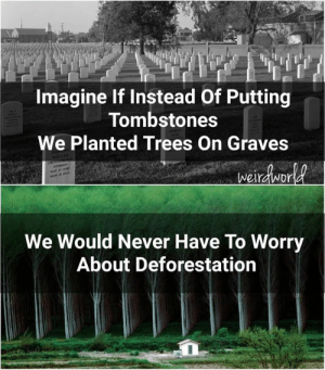Memes, Trees, and Never: Imagine If Instead Of Putting  Tombstones  We Planted Trees On Graves  We Would Never Have To Worry  About Deforestation