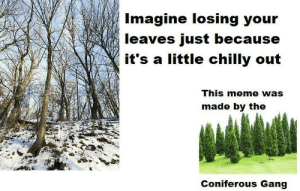 Only tree huggers will get it via /r/memes https://ift.tt/2RGcr6E: Imagine losing your  leaves just because  it's a little chilly out  This meme was  made by the  Coniferous Gang Only tree huggers will get it via /r/memes https://ift.tt/2RGcr6E