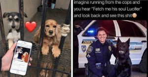 """Delivery! Fresh hot doggo memes at your service!#dogs #dogmemes #funnydogs #funnydogmemes #funnymemes #animalmemes: imagine running from the cops and  you hear """"Fetch me his soul Lucifer""""  and look back and see this shit  TOWN Delivery! Fresh hot doggo memes at your service!#dogs #dogmemes #funnydogs #funnydogmemes #funnymemes #animalmemes"""