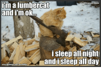 Climbing, Facebook, and Memes: imalumbercat  cataddicts anony-mouse  and I'm ok  i sleep all night  and i sleep all  day  www.facebook.com/cat.addicts I know, I know, it should have been slumbercat.  Now let's all sing:  i climb high trees, I meow for meals, I play with mommy's bra. I'm a purrfect feline and like to play with straws  You get the ref right? nudge nudge, wink, wink, say no more... :-)