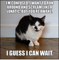 Why I never get a good night's sleep: IMCONFUSED I WANT TO RUN  AROUND AND SCREAM LIKE A  LUNATIC, BUT YOUTREAWAKEo  IGUESSICAN WAIT. Why I never get a good night's sleep