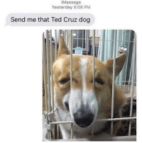 Thanks: iMessage  Yesterday 9:08 PM  Send me that Ted Cruz dog Thanks