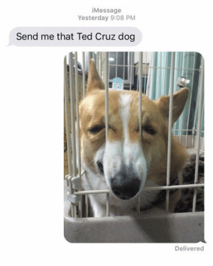 me irl by KABAR_in_the_gay_bar FOLLOW HERE 4 MORE MEMES.: iMessage  Yesterday 9:08 PM  Send me that Ted Cruz dog  Delivered me irl by KABAR_in_the_gay_bar FOLLOW HERE 4 MORE MEMES.