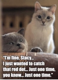"Grumpy Cat, Reds, and Red: ""Imfine, Stacy  Just Wanted to catch  that red dot. Just onetime,  you know.. Just onetime."