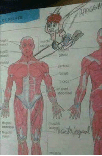 Memes, 🤖, and Biceps: imGCH  or. xeLATE  musch  acao,  pitulai  pectoral .  biceps  >deept  abdominal  neater  aoni  i moschi  Meli Mi libro de Biologia