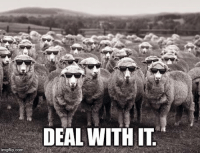When someone says I'm a blind sheep for following Jesus...: imgflip.comi  DEAL WITH IT When someone says I'm a blind sheep for following Jesus...
