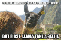 funny llama: IMGONNAGOCLIMBTHESE RUINSANDSPITONSOME TOURISTS  BUT FIRST LLAMA TAKE ASELFIE