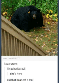imgur.com/APLDVYE  Itscarororo:  kingcheddarxvii  she's here  did that bear eat a tent