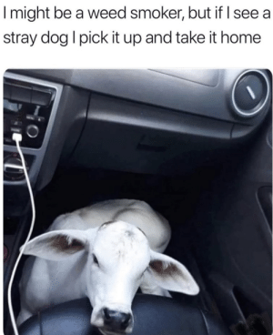 The best of dogs via /r/memes https://ift.tt/33YnU4y: Imight be a weed smoker, but if I see a  stray dog I pick it up and take it home The best of dogs via /r/memes https://ift.tt/33YnU4y
