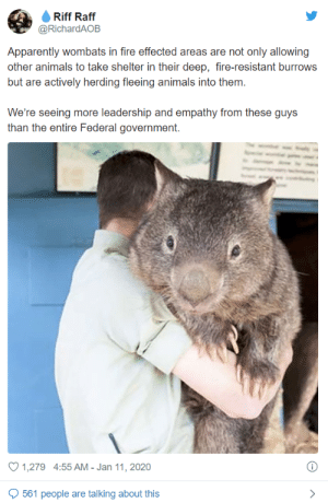 imlizy: black-mountain-radio:   witches-ofcolor:  bitchcraftandfashion:  jehovahhthickness:  They're huge??????????   That's……a fucking WOMBAT?!?!  i thought wombats were small. That looks photoshopped!   That's Patrick! A wombat raised since he was a joey on a wildlife park in Victoria, Aussie, he's known as both the oldest and biggest wombat we know of! Most wombats average around 30 to 40 inches, so fat Pat is definitely an outlier. For comparison here's a more 'regular' wombat.     dynamaxed : imlizy: black-mountain-radio:   witches-ofcolor:  bitchcraftandfashion:  jehovahhthickness:  They're huge??????????   That's……a fucking WOMBAT?!?!  i thought wombats were small. That looks photoshopped!   That's Patrick! A wombat raised since he was a joey on a wildlife park in Victoria, Aussie, he's known as both the oldest and biggest wombat we know of! Most wombats average around 30 to 40 inches, so fat Pat is definitely an outlier. For comparison here's a more 'regular' wombat.     dynamaxed