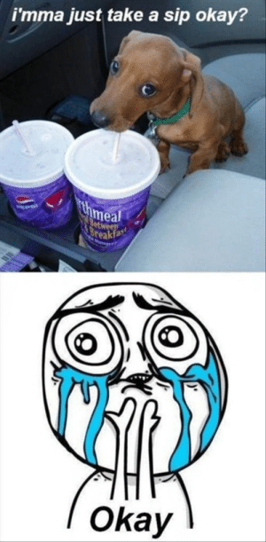 Animals, Dogs, and Memes: i'mma just take a sip okay?  meal  eakfas  Okay Dog Memes Of The Day 32 Pics – Ep28 #dogs #dogmemes #memes#lovelyanimalsworld - Lovely Animals World