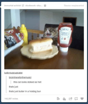 Tumblr, Hell, and Cat: immortal-activist clockwork-sha...  Source: neopiacentral  HEIN  TONATO  KETCHU  ludicrouscupcake:  broimhereforthemusic:  this cat looks stoked as hell  thats just  thats just butter ina hotdog bun  142,587 notes  1ans Fot The more you look at it the worse it gets