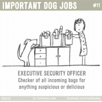 Inspection:: IMPORTANT DOG JOBS  #11  Olio  EXECUTIVE SECURITY OFFICER  Checker of all incoming bags for  anything suspicious or delicious  facebook.com/how 2badog  (c) lastlemon.com  DOG 155 Inspection: