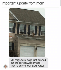 Dogs, Memes, and Party: Important update from mom  My neighbors' dogs just pushed  out the screen window and  they're on the roof. Dog Party! 😂😂lol