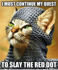 Cute, Memes, and Reds: IMUST CONTINUE MY OUEST  TO SLAY THE RED DOT For more cute pics LIKE us at The Purrfect Feline Page