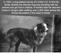 https://t.co/YMzrqLB8Ip: In 1923, a dog walked across 2/3 of the U.S. to find his  family. Bobbie the Wonder Dog was traveling with his  owners and got lost in Indiana. 6 months later he returned  home in Oregon after walking over 2,500 miles across the  Rocky Mountains in the dead of winter. https://t.co/YMzrqLB8Ip