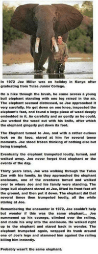 Climbing, College, and Family: in 1972 Joe Miller was on holiday in Kenya after  graduating from Tulsa Junior College.  on a hike through the brush, he came across a young  bull elephant standing with one leg raised in the air.  The elephant seemed distressed, so Joe approached it  very carefully. He got down on one knee, inspected the  elephant's foot, and found a large piece of wood deeply  embedded in it. As carefully and as gently as he could,  Joe worked the wood out with his knife, after which  the elephant gingerly put down its foot.  The Elephant tumed to Joe, and with a rather curious  ook on its face, stared at him for several tense  moments. Joe stood frozen thinking of nothing else but  being trampled.  Eventually the elephant trumpeted loudly, tumed, and  walked away. Joe never forgot that elephant or the  events of the day.  Thirty years later, Joe was walking through the Tulsa  Zoo with his family. As they approached the elephant  enclosure, one of the creatures tumed and walked  over to where Joe and his family were standing. The  arge bull elephant stared at Joe, lifted its front foot off  the ground, and then put it down. The elephant did that  several times then trumpeted loudly, all the while  staring at Joe.  Remembering the encounter in 1972, Joe couldn't help  but wonder if this was the same elephant Joe  summoned up his courage, climbed over the railing,  and made his way into the enclosure. He walked nght  up to the elephant and stared back in wonder. The  elephant trumpeted again, wrapped its trunk around  one of Joe's legs and slammed him against the railing  killing him instantly.  Probably wasn't the same elephant.