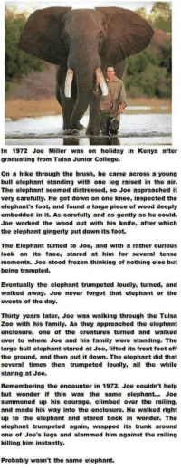 College, Family, and Frozen: In 1972 Joe Miller was on holiday in Kenya atter  graduating from Tulsa Junior College.  On a hike through the brush, he came across a young  bull elephant standing with one leg raised in the air.  The elephant seemed distressed, so Joe approached it  very carefully. He got down on one knee, inspected the  elephant's foot, and found a large piece of wood deeply  embedded in it. As carefully and as gently as he could,  Joe worked the wood out with his knife, after which  the elephant gingerly put down its foot.  The Elephant tumed to Joe, and with a rather curiouS  look on its face, stared at him for several tense  moments. Joe stood frozen thinking of nothing else but  being trampled.  Eventually the elephant trumpeted loudly, tumed, and  waiked away, Joe never forgot that elephant or the  events of the day.  Thirty years later, Joe was walking through the Tuisa  Zoo with his family. As they approached the elephant  enclosure, one of the creatures turned and walked  over to where Joe and his family were standing. The  large bull elephant stared at Joe, lifted its front foot off  the ground, and then put it down. The elephant did that  several times then trumpeted loudly, all the while  staring at Joe.  Remembering the encounter in 1972, Joe couldn't help  but wonder if this was the same elephant.. Joe  summoned up his courage, climbed over the railing,  and made his way into the enclosure. He walked right  up to the elephant and stared back in wonder. The  elephant trumpeted again, wrapped its trunk around  one of Joe's legs and slammed him against the railing  killing him instantly.  Probably wasn't the same elephant.