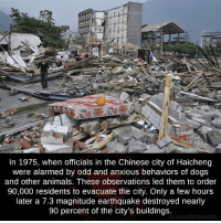 Memes, Chinese, and Earthquake: In 1975, when officials in the Chinese city of Haicheng  were alarmed by odd and anxious behaviors of dogs  and other animals. These observations led them to order  90,000 residents to evacuate the city. Only a few hours  later a 7.3 magnitude earthquake destroyed nearly  90 percent of the city's buildings.  b.com/factsweird