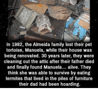 Alive, Dad, and Family: In 1982, the Almeida family lost their pet  tortoise, Manuela, while their house was  being renovated. 30 years later, they were  cleaning out the attic after their father died  and finally found Manuela... alive. They  think she was able to survive by eating  termites that lived in the piles of furniture  their dad had been hoarding. https://t.co/DhIa2NzogV