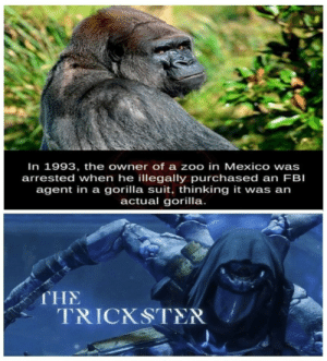 Get nae-nae d: In 1993, the owner of a zoo in Mexico wa  arrested when he illegally purchased an FBI  agent in a gorilla suit, thinking it was an  actual gorilla.  s  THE  TRICKSTER Get nae-nae d