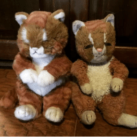 Love, Pristine, and Cat: In 1995, my great-aunt gave me a stuffed cat. It was my absolute favorite, and slept with me every night through my childhood. When she passed, we found out she had bought an identical cat and kept it in pristine condition for two decades. The years of love certainly left their m