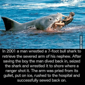 Shark, Hospital, and Back: In 2001 a man wrestled a 7-foot bull shark to  retrieve the severed arm of his nephew. After  saving the boy the man dived back in, seized  the shark and wrestled it to shore where a  ranger shot it. The arm was pried from its  gullet, put on ice, rushed to the hospital and  successfully sewed back on. The original manly man