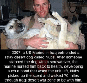 Wholesome 🙂: In 2007, a US Marine in Iraq befriended a  stray desert dog called Nubs. After someone  stabbed the dog with a screwdriver, the  marine nursed him back to health, developing  such a bond that when the unit left, Nubs  picked up the scent and walked 70 miles  through Iraqi desert war zone to be with him. Wholesome 🙂
