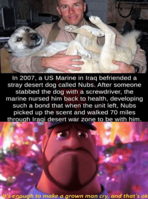Beautiful, Iraq, and Iraqi: In 2007, a US Marine in Iraq befriended a  stray desert dog called Nubs. After someone  stabbed the dog with a screwdriver, the  marine nursed him back to health, developing  such a bond that when the unit left, Nubs  picked up the scent and walked 70 miles  through Iraqi desert war zone to be with him.  it's enough to make a grown man cry, and that's ok it's so beautiful
