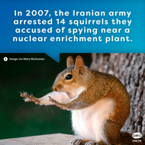 Facts, Omg, and True: In 2007, the Iranian army  arrested 14 squirrels they  accused of spying near a  nuclear enrichment plant.  0 Image via Mary McGowan  OMG  FACTS Yes, it's true. See reply.