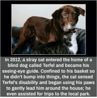 Blind Dog: In 2012, a stray cat entered the home of a  blind dog called Terfel and became his  seeing-eye guide. Confined to his basket so  he didn't bump into things, the cat sensed  Terfel's disability and began using his paws  to gently lead him around the house, he  even assisted for trips to the local park.