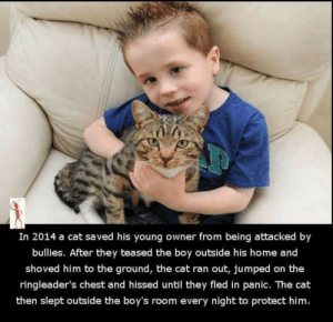 Cats, Home, and Humanity: In 2014 a cat saved his young owner from being attacked by  bullies. After they teased the boy outside his home and  shoved him to the ground, the cat ran out, jumped on the  ringleader's chest and hissed until they fled in panic. The cat  then slept outside the boy's room every night to protect him. HUMANITY IN CATS RESTORED