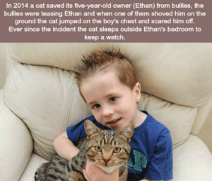 Good, Watch, and Old: In 2014 a cat saved its five-year-old owner (Ethan) from bullies, the  bullies were teasing Ethan and when one of them shoved him on the  ground the cat jumped on the boy's chest and scared him off.  Ever since the incident the cat sleeps outside Ethan's bedroom to  keep a watch. Cat does a good deed