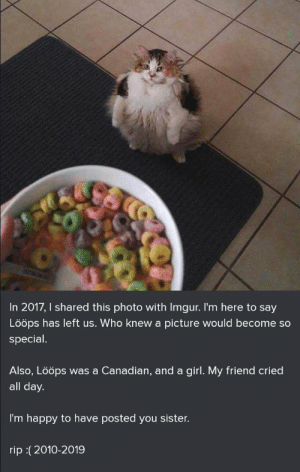 blessedimagesblog:  Blessed_respects  NOOOOOOOOOOOOOOOOOOOOOOO: In 2017, I shared this photo with Imgur. I'm here to say  Lööps has left us. Who knew a picture would become so  special  Also, Lööps was a Canadian, and a girl. My friend cried  all day.  I'm happy to have posted you sister.  rip :(2010-2019 blessedimagesblog:  Blessed_respects  NOOOOOOOOOOOOOOOOOOOOOOO