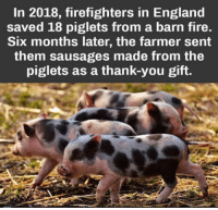 Fate is a funny thing: In 2018, firefighters in England  saved 18 piglets from a barn fire.  Six months later, the farmer sent  them sausages made from the  piglets as a thank-you gift. Fate is a funny thing