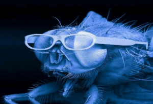 Glasses, Science, and Technology: In a 2005 science contest, a company submitted their latest advances in laser cutting technology by making glasses small enough for a fly to wear.