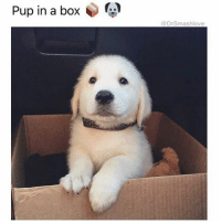 """Bruh, Chill, and Dating: in a box  a box  @DrSmashlove See Bruh this pup is regal. Refined. His father founded a consulting firm in Boston that he sold in 2008 for $575m, so he's rich, but he's a classy rich dude. Like instead of driving a douchebag red Ferrari, he drive a baby blue Porsche 911 Turbo, because he knows it's the best. So lil man was raised with the trappings of wealth but is never cocky, and doesn't even let people know he's rich. In addition, he has his own career, as a senior VP of corporate development at a growing tech firm like GrubHub. He works hard despite being born to wealth because he wanna be his own man, u feel me? Like baby girl u met him on Coffee and Bagel and u dating him for eight months and he all """"hey would you be up for spring break with my fam? If not NP"""" and u just like """"fuck it why not"""" and then he send u an itinerary where a helicopter pick u up and fly u to a remote island off the coast of North Carolina and u call your mama all like """"MOM LOL SO ANDREW INVITED ME TO HIS FAMILY'S PRIVATE ISLAND"""" and your mom all """"sweetie I saw a Facebook forward on this, be careful, this could be an elaborate hoax and he could be kidnapping you"""" and u send her the itinerary that show the pilot's name and she just like """"sweetie I am happy for you! I've waited too long for grand kids!"""" and u just like """"MOM GOD LOL"""". And u go to the island and their family's chef makes rib eye and mint juleps and then late night grilled cheeses while y'all hanging at the beach and u tempted to snap chat it but u also know your friends are low key jealousy betches who will ruin this shit for u so u chill lol. Shout to this lil man, Andrew Hunter Bedford IV. Wealthy but classy. And he's in a box 😍😂😂😂 (pup: @murphy_lou_bobo)"""