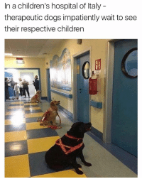 Children, Dogs, and Memes: In a children's hospital of Italy  therapeutic dogs impatiently wait to see  their respective children plot twist: it's one big room and im the only one in there