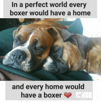 Memes, Boxer, and 🤖: In a perfect world every  boxer would have a home  and every home would  have a boxer Adopt or Foster to make a boxer's life (and yours!) better!!   http://www.nwboxerrescue.org/
