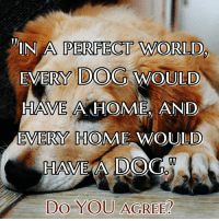 Memes, Home, and World: IN A PERFECT WORLD  EVERY DOG WOULD  HAVE A HOME AND  EVERY HOME WOULD  HAVE A DOG  DO YOU AGREE Perfect...