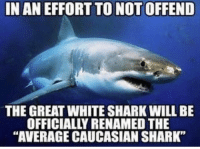 "Memes, Shark, and Caucasian: IN AN EFFORT TO NOT OFFEND  THE GREAT WHITE SHARK WILL BE  OFFICIALLY RENAMED THE  ""AVERAGE CAUCASIAN SHARK"""