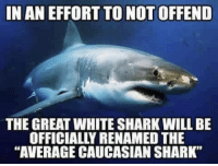 """Shark: IN AN EFFORT TO NOT OFFEND  THE GREAT WHITE SHARK WILL BE  OFFICIALLY RENAMED THE  """"AVERAGE CAUCASIAN SHARK"""""""