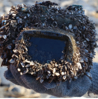 In an extraordinary tale of luck and coincidence, a camera lost at sea for more than two years was discovered and will be returned to its owner. It washed up on a beach in Taiwan covered in barnacles and barely recognisable - but thanks to a waterproof case, remained in perfect working condition. The camera's owner, Japanese student Serina Tsubakihara, was on holiday on the island of Ishigaki, Okinawa, east of Taiwan, when she dropped the camera while scuba diving. A picture of dolphins taken by Serina was discovered among other photos, following the discovery of the camera. camera photography underwater diving waterproof taiwan japan beach bbcnews: In an extraordinary tale of luck and coincidence, a camera lost at sea for more than two years was discovered and will be returned to its owner. It washed up on a beach in Taiwan covered in barnacles and barely recognisable - but thanks to a waterproof case, remained in perfect working condition. The camera's owner, Japanese student Serina Tsubakihara, was on holiday on the island of Ishigaki, Okinawa, east of Taiwan, when she dropped the camera while scuba diving. A picture of dolphins taken by Serina was discovered among other photos, following the discovery of the camera. camera photography underwater diving waterproof taiwan japan beach bbcnews