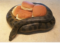 in an unforeseen turn of events, it's is actually the anaconda who's got buns, hun: in an unforeseen turn of events, it's is actually the anaconda who's got buns, hun