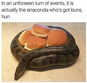 Anaconda, Memes, and Got: In an unforseen turn of events, it is  actually the anaconda who's got buns,  hun Who's got buns? via /r/memes https://ift.tt/2zL4Ie4