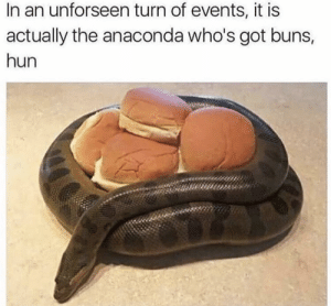 Now that's real, real, real: In an unforseen turn of events, it is  actually the anaconda who's got buns,  hun Now that's real, real, real