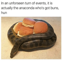 Oh my goodness.   -Bobby Hill: In an unforseen turn of events, it is  actually the anaconda who's got buns,  hun Oh my goodness.   -Bobby Hill
