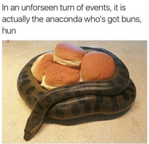 Thicc Snek: In an unforseen turn of events, it is  actually the anaconda who's got buns,  hun Thicc Snek