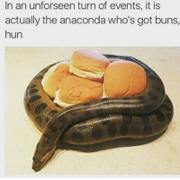Got Buns Hun: In an unforseen turn of events, it is  actually the anaconda who's got buns,  hun